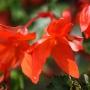 Sārtie ziedi