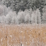 Pirmais sniegs
